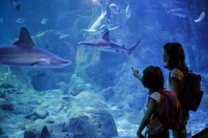 Museo acuarium Inteligencia Naturalista